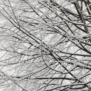 Dresden Literatur Im Winter