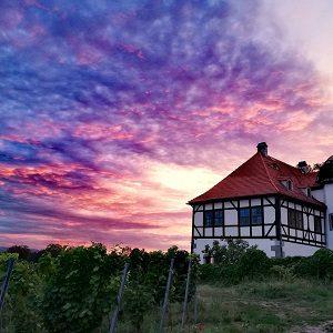 """Tag des offenen Weinguts Radebeul Teil III: """"Wein ist flüssiges Sonnenlicht"""""""
